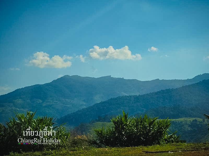 เที่ยวภูชี้ฟ้า